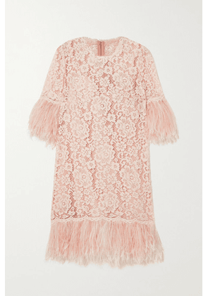 Dolce & Gabbana - Feather-trimmed Cotton-blend Guipure Lace Mini Dress - Pink
