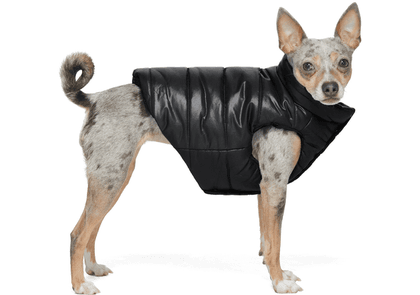 Moncler Genius Black Poldo Dog Couture Edition Insulated Jacket